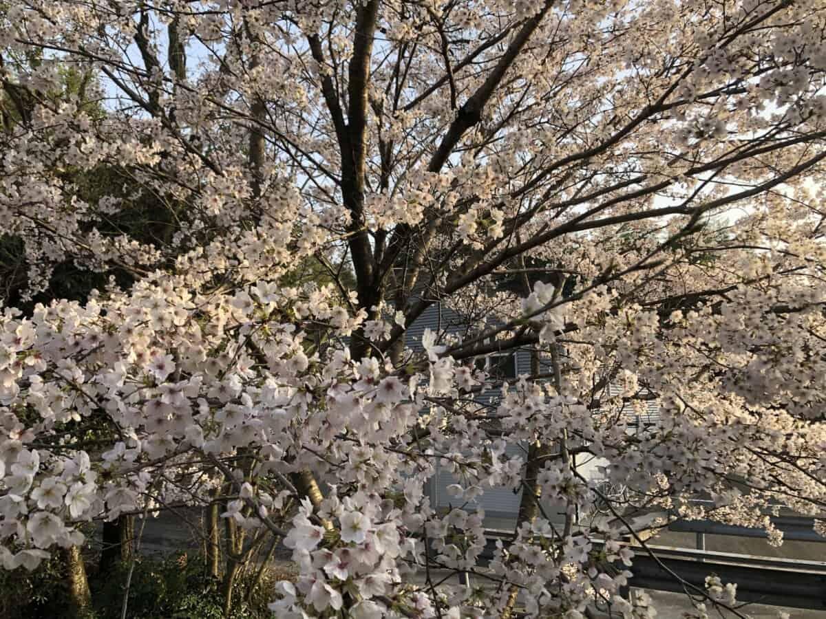 春の今日のこと