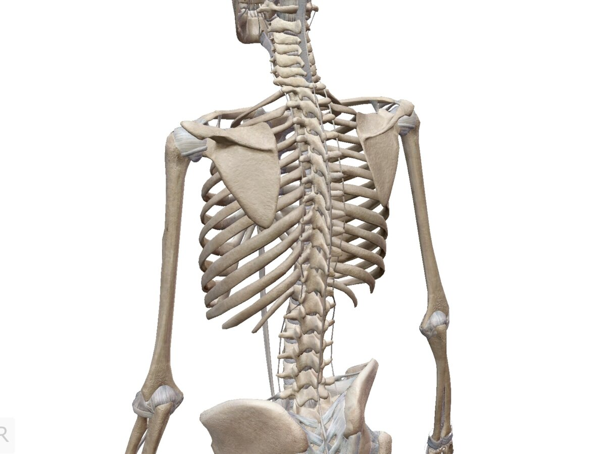 今週のレッスンは胸部がポイント